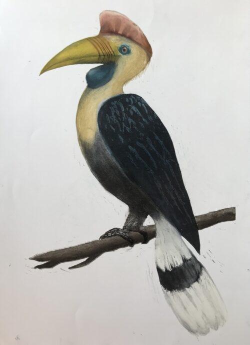 Carolyn Graham yellow billed hornbill